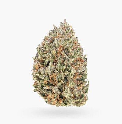 Greenhouse Apricot Kush (AA)   Hush Cannabis Club